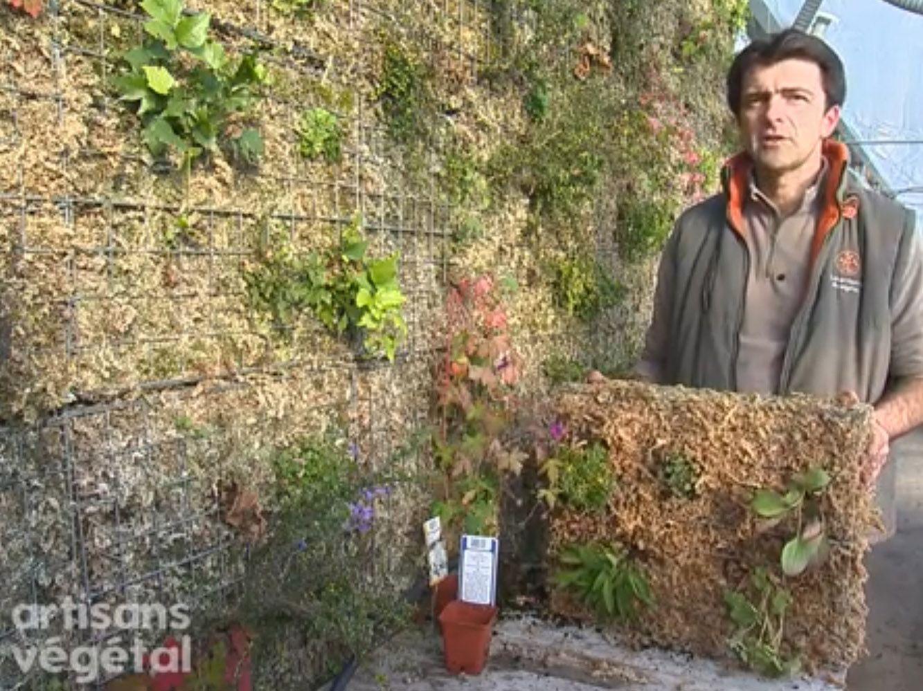 Plantes Pour Mur Végétal Extérieur comment faire un mur végétal ?